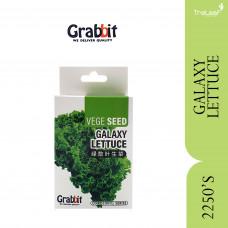 GRABBIT GALAXY LETTUCE (+/-2250SEEDS)